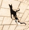 צל חתול כחתול