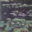 חבצלות מים  water lili