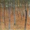 עצי אשור Beechwood