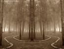 יער קסום