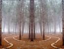 יער קסום צבעוני