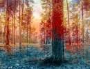 קסם היער