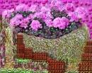 העולם בפרחים