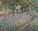 Irises אירוסים