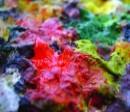 תמונה של all my colors | תמונות