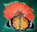 פרפר על הפרח