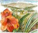 פרח אמרילוס ונוף