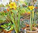 פריחה באביב