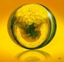 צהוב אהוב