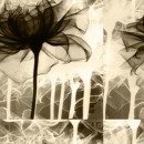 פרח יחיד
