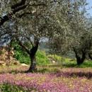 עצים ופריחה