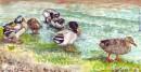 ברווזים