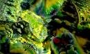 green fresh@ התחלה חדש