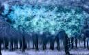 יער חורפי