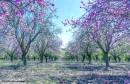 אביב צבעוני