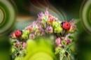 גשר הפרחים של החיפושיו