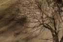עץ ברוח