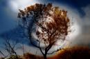 עץ במערבולת