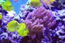 ים של צבע