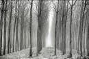 היער השחור-לבן
