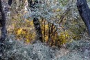 השקיעה שבין עצי היער