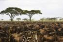 סוואנה אפריקנית
