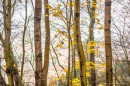 שלכת ביער