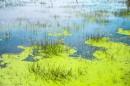 צמחיית מים