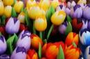 צבעונים צבעוניים
