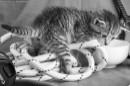 חתלתול סקרן
