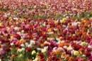פרחים פרחים