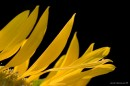 צהוב ושחור