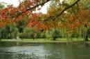 בפארק