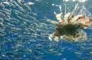 זהרון צד דגים 2