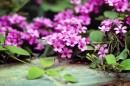 פרחים קטנים
