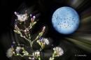 פרחי הבר והירח