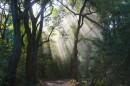 קרני אור ביער