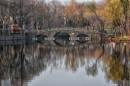 גשר ביער