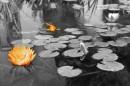 פרח ודג