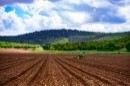 שדות עמק יזרעאל