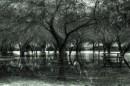 היער המכושף
