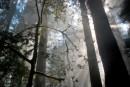 יער בערפילים