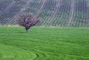 פסים ירוקים