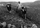 דיר ניזאם 1947 - חריש