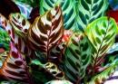 אלבום פרחים-יופי של שי