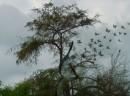 עץ רוקד