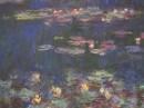 water lilies חבצלות מי