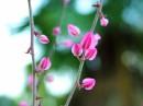 טיפות של פרחים