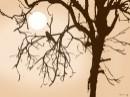 ציפור על עץ