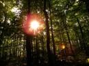 שמש ביער